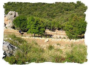 2005 - Abstieg zum Kloster Lluc