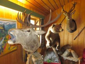 2015 - Osterbos Tierwelt